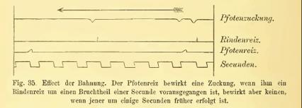 Sigmund Exner - Effect der Bahnung