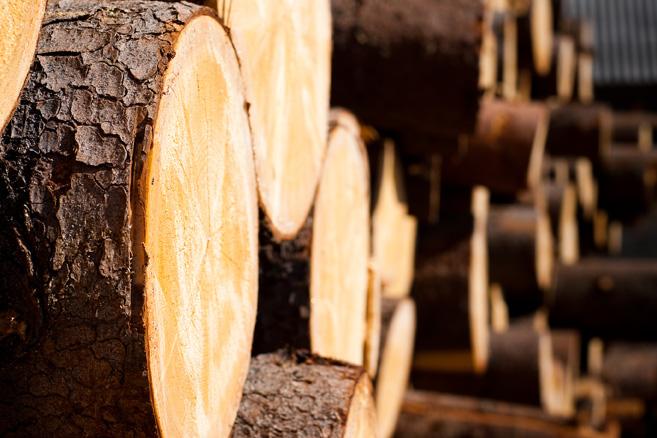 PulPaper 2018: Puu on tulevaisuuden raaka-aine