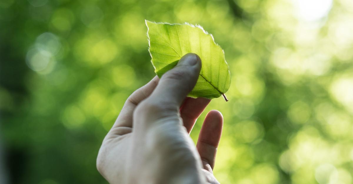 vihrea lehti