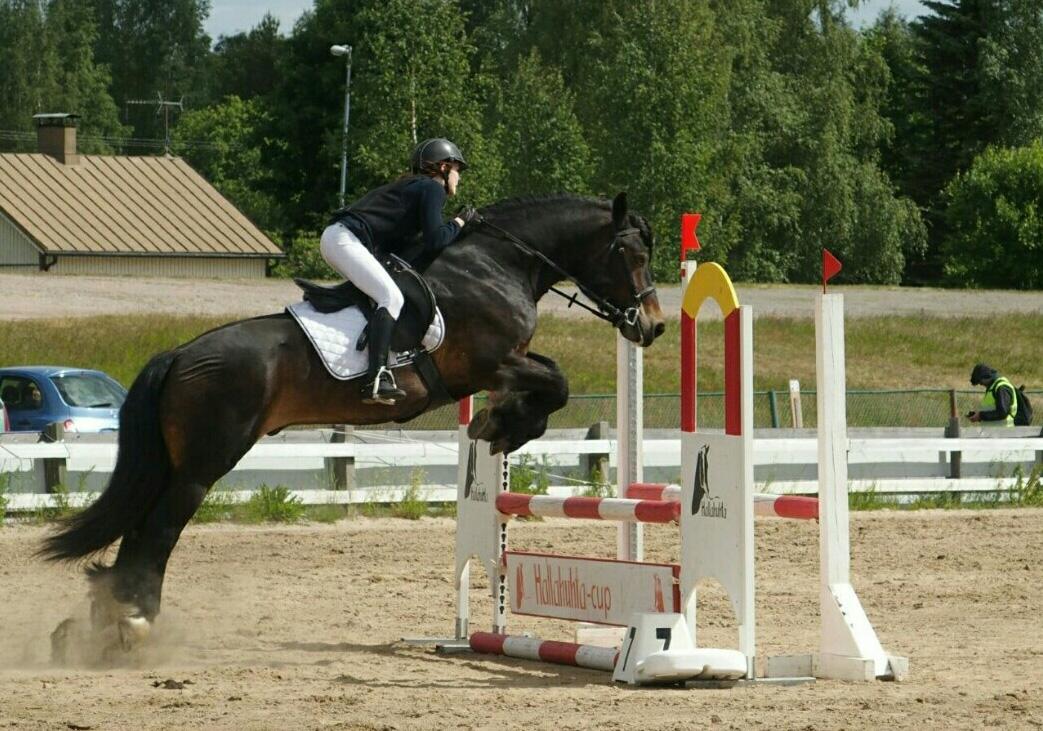 Pohjoisruotsinhevonen Goexpo Horse
