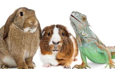 Sammakkoeläimiä