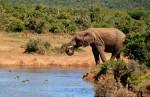 Kan jeg bruge min mobil på ferien i Afrika?