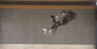 ørne bekæmpe droner