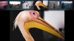 Ny Lightroom til Apple TV: Se dine billeder på den store skærm