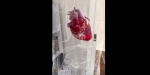 Bedste augmented reality app: Insight Heart