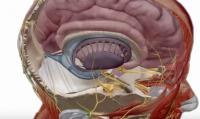 human anatomi ar
