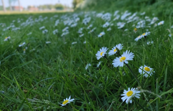 oneplus 6 bokeh blomst