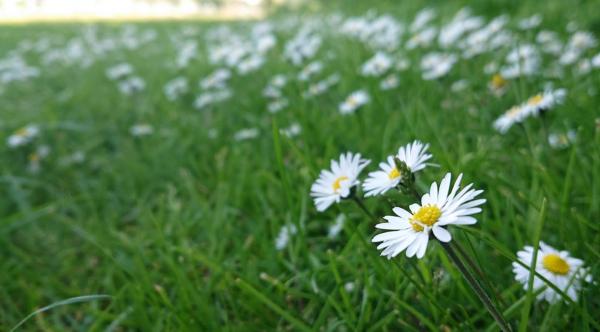 sony xperia xz2 bokeh blomst