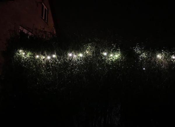 iphone xs max mørke hæk med lys