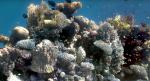 Algoritme kan fjerne vand fra undervandsbilleder med fantastiske resultater