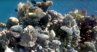 billeder under vand