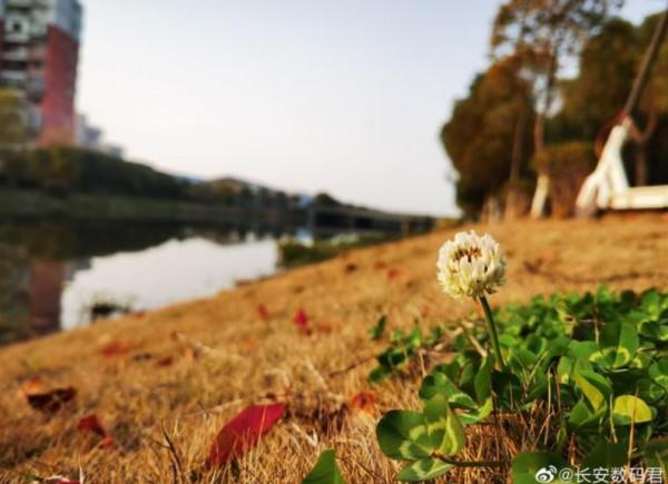 Se billeder taget med kameraet i Huawei P40