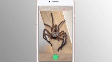 Shazam for slanger og edderkopper: Farlig eller ej?
