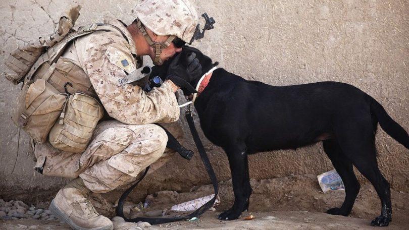 Det amerikanske militær giver hunde AR briller