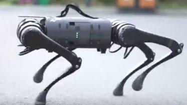 Robotten der vil være dit næste kæledyr