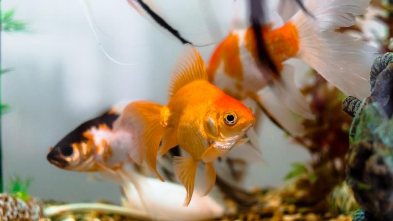 Netværk hacket og database stjålet via termometer i akvarie