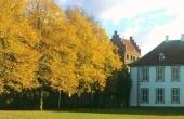 Tip: Fang efteråret med mobilens kamera
