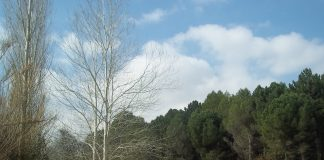 Parc Forestal de Can Cases