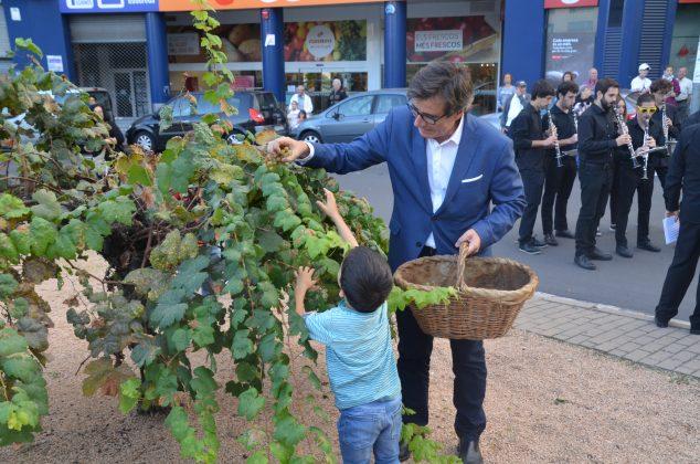 Festa Roser 2017. Recollida del raïm