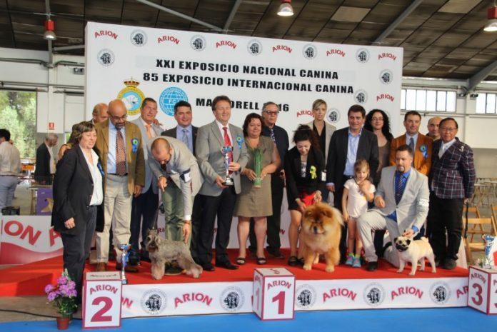 Exposició canina