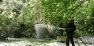 Campanya boscos de ribera