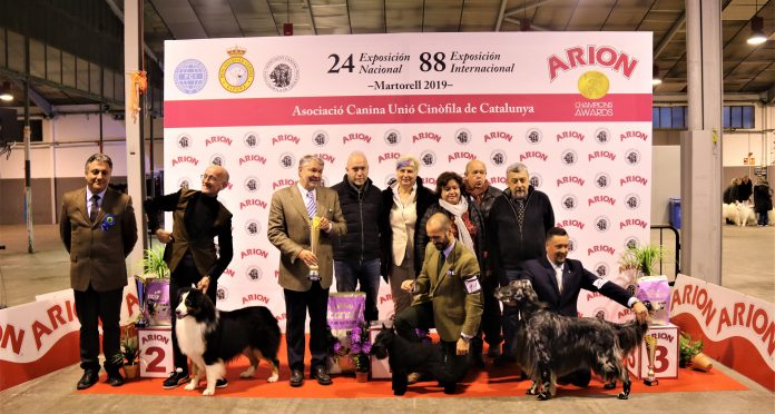 Pòdium Best in Show 88a Exposició Internacional Canina