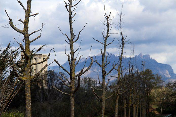 Plantada d'arbres de Vibracoustic a la llera del Llobregat