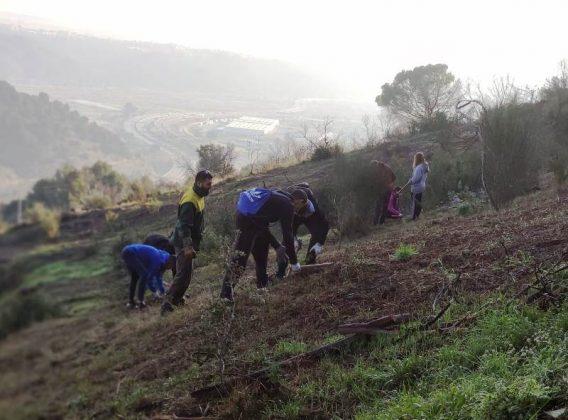 Reforestació de la muntanya de Les Torretes