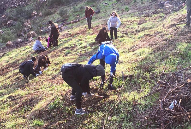 Reforestation of the mountain of Les Torretes