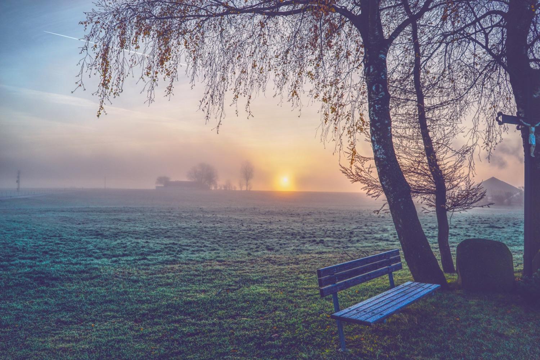 Bank im Nebel unter Baum. Foto: Dominik Inmann/Unsplash