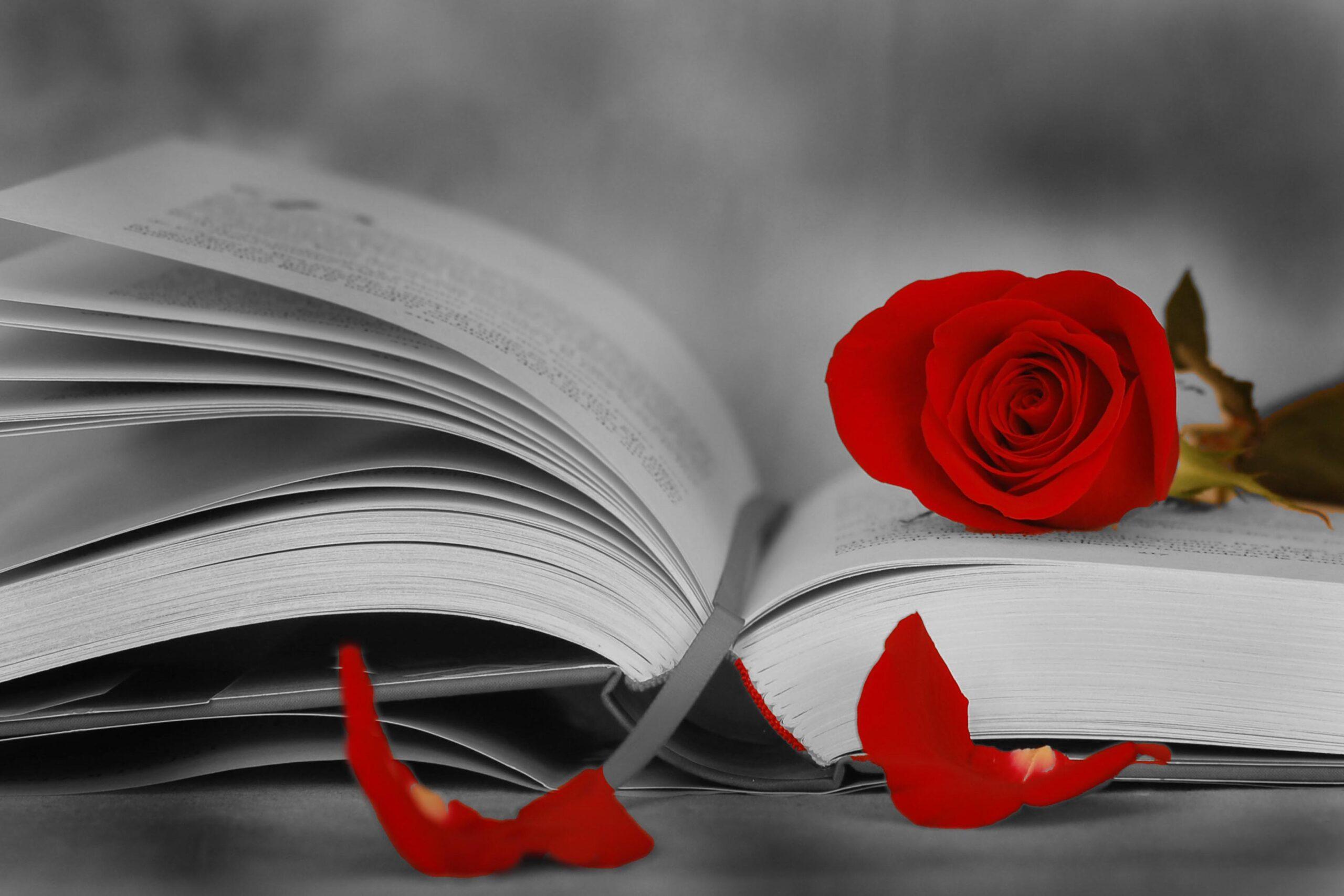Per Sant Jordi, una rosa i un llibre