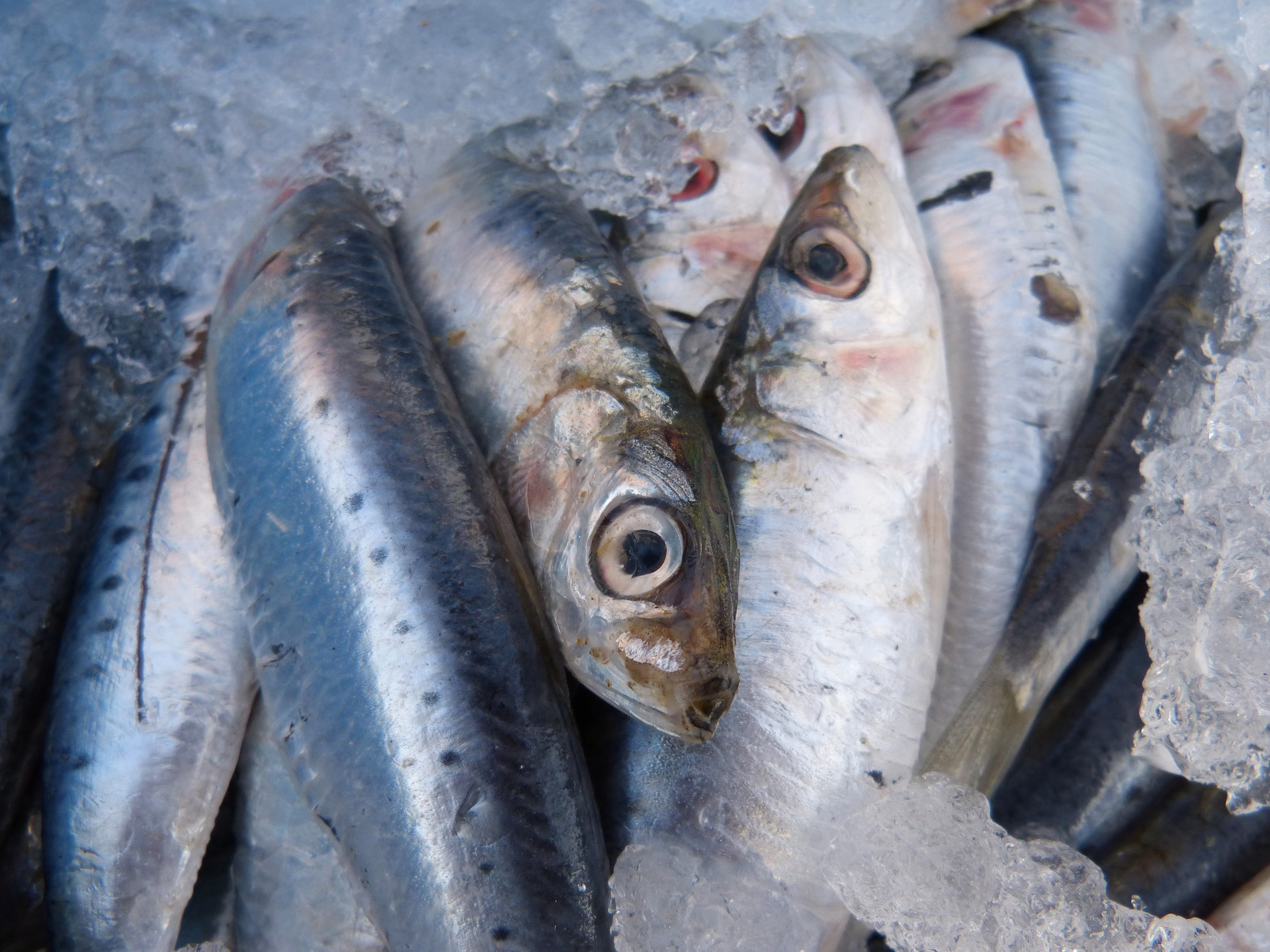 Sardines | Pixabay