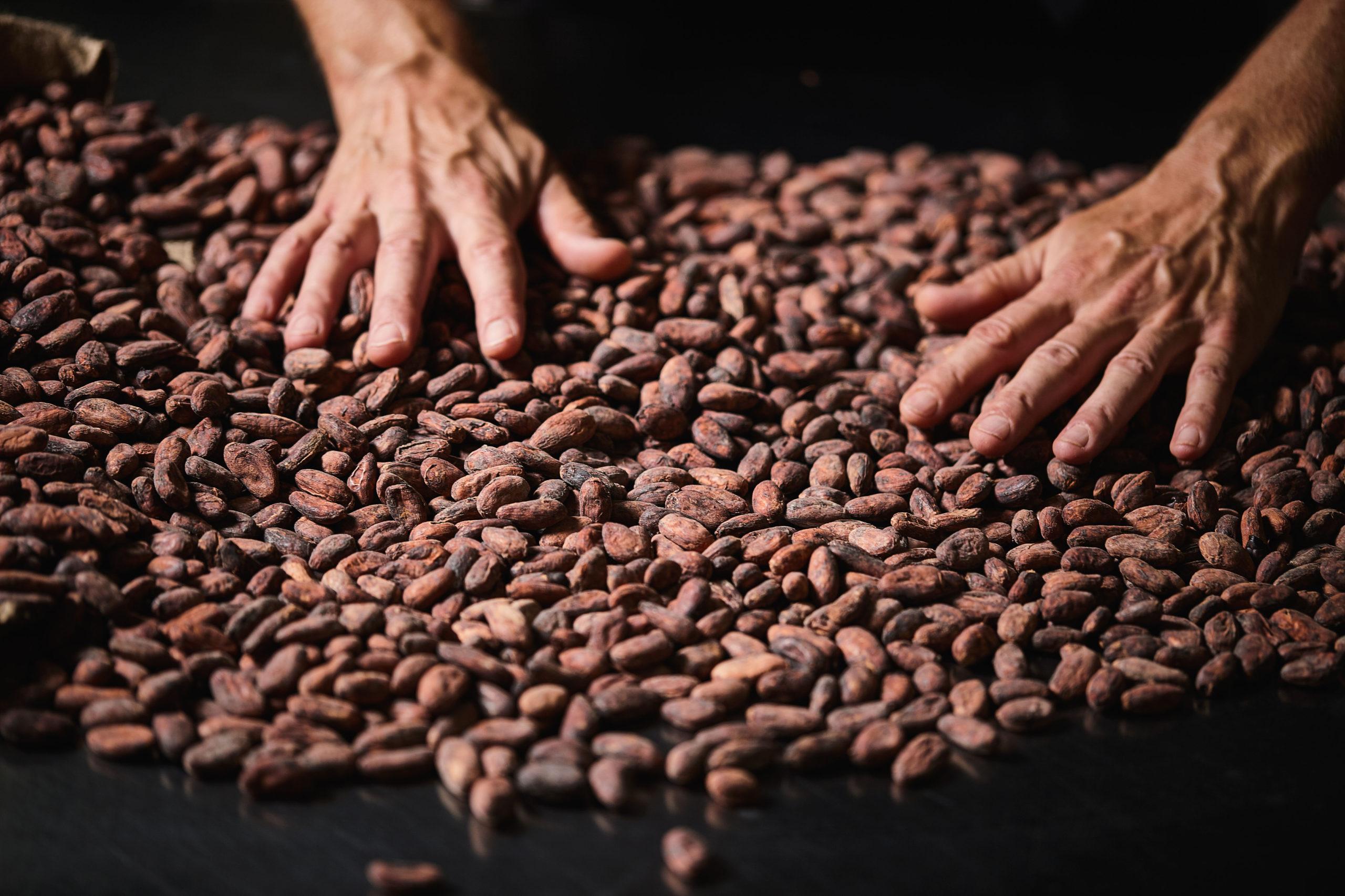 Casa Cacao gira al voltant del món de la xocolata | ACN