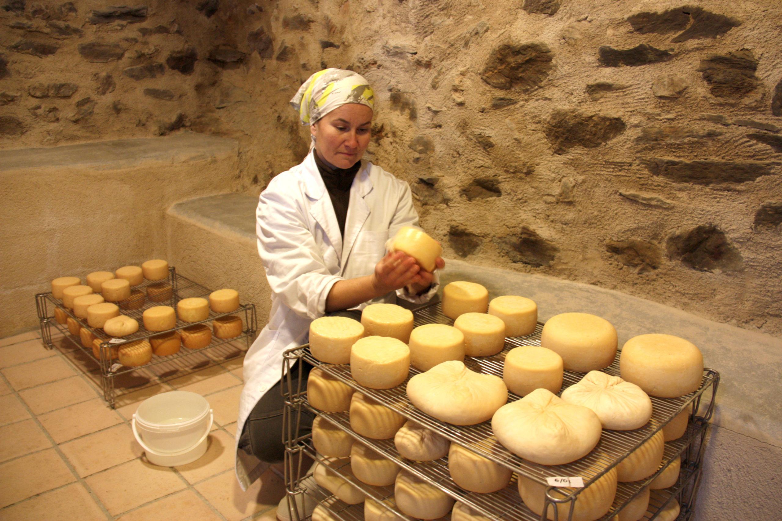 La Sara Gutiérrez, rentant formatges que estan madurant molt a prop del seu ramat de cabres a Éller, a Bellver de Cerdanya | ACN