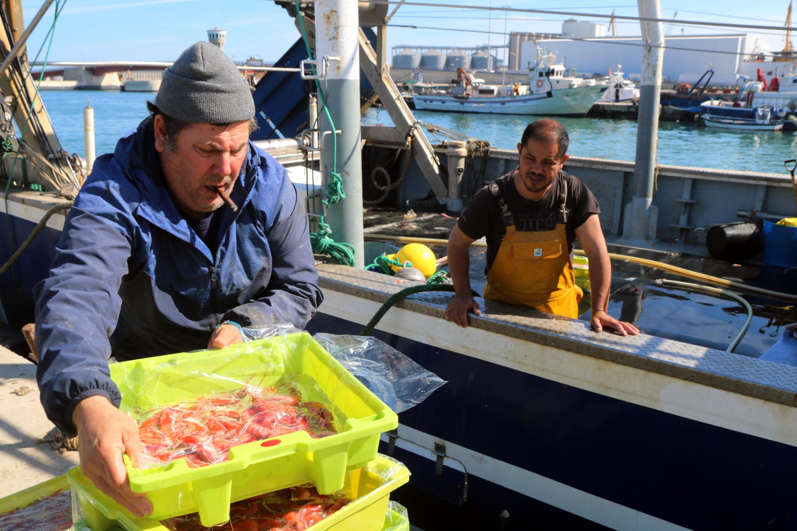 Un patró de l'arrossegament de Tarragona apilant caixes de gamba, amb un mariner damunt la barca al darrere | ACN