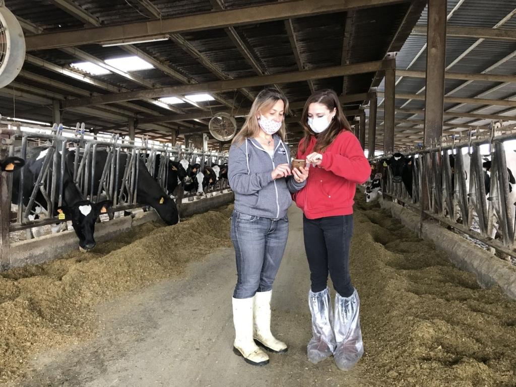La Roser i la Maria Àngels consulten el mòbil enmig de la granja Serret   Quico Sallés