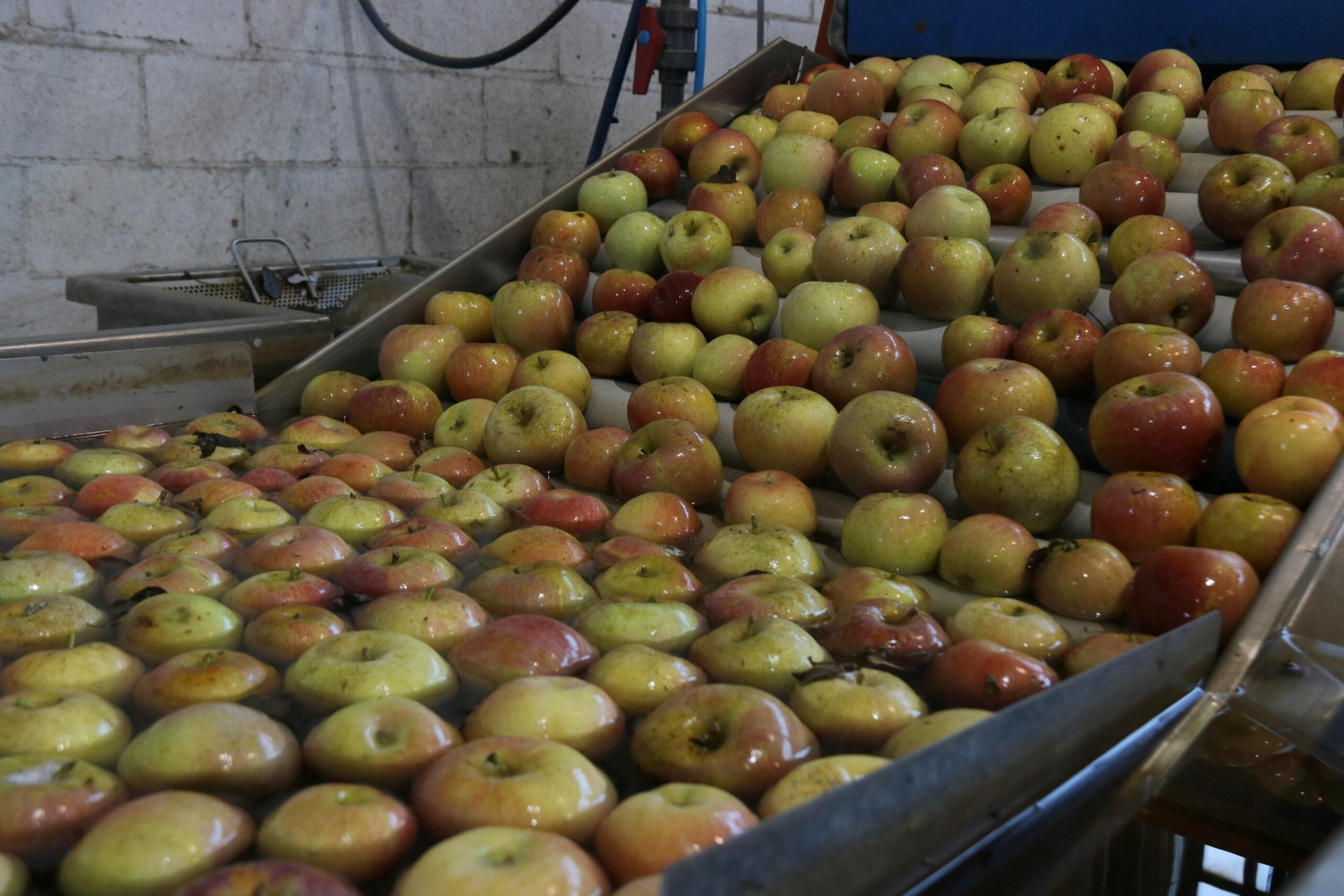 Nombroses pomes | ACN