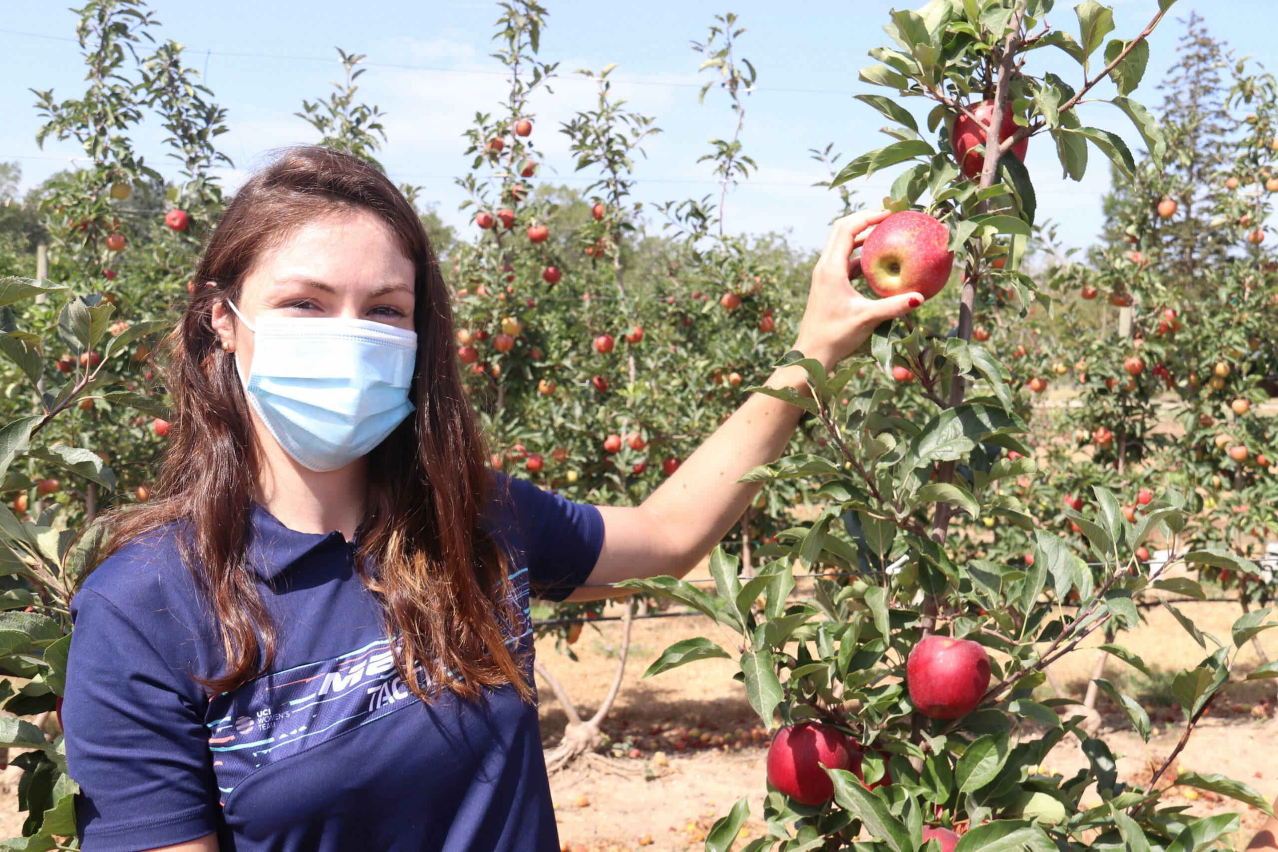 Una de les ciclistes de l'equip femení de ciclisme Massi Tactic, Ariadna Trias, recollint la primera poma de la IGP Poma de Girona  | ACN