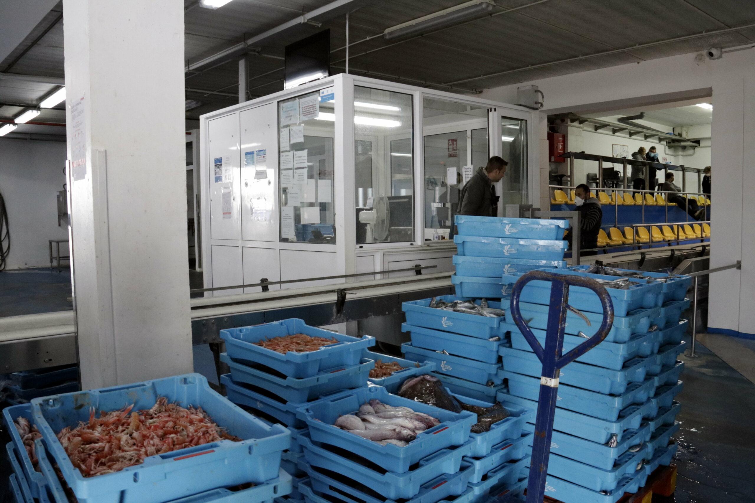 Peix i marisc a punt d'entrar a subhasta a la llotja de Palamós | ACN
