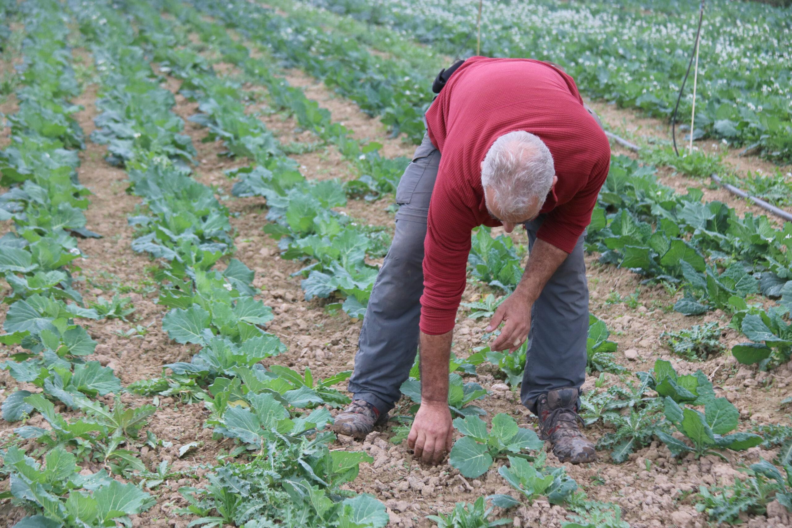 En Joan Coll, un dels pagesos que participa en la iniciativa de Xarxa Pagesa al seu camp a Albons | ACN