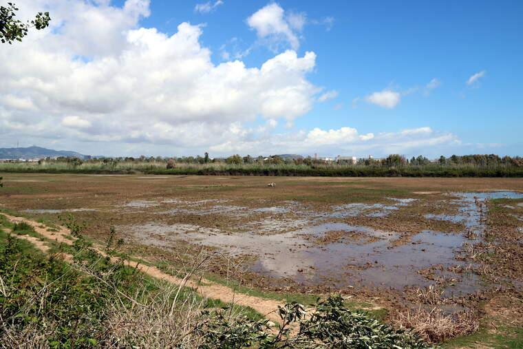 Espai natural del Delta de Llobregat    ACN