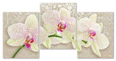 Beautiful orchids   Needlepoint Kits