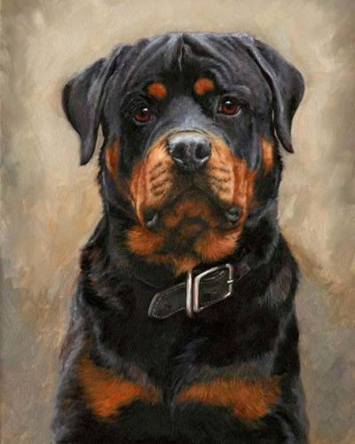 Rottweiler | Needlepoint Kits