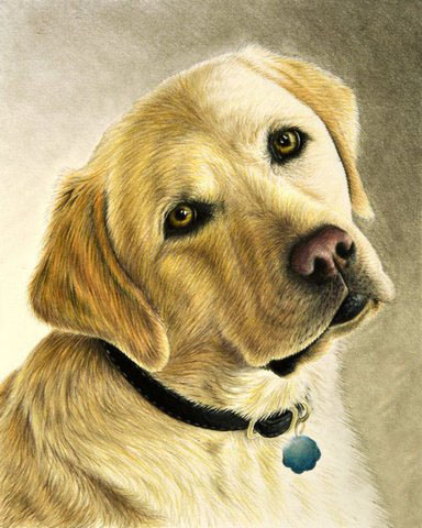 Labrador | Needlepoint Kits