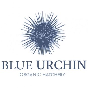 Blue Urchin logo