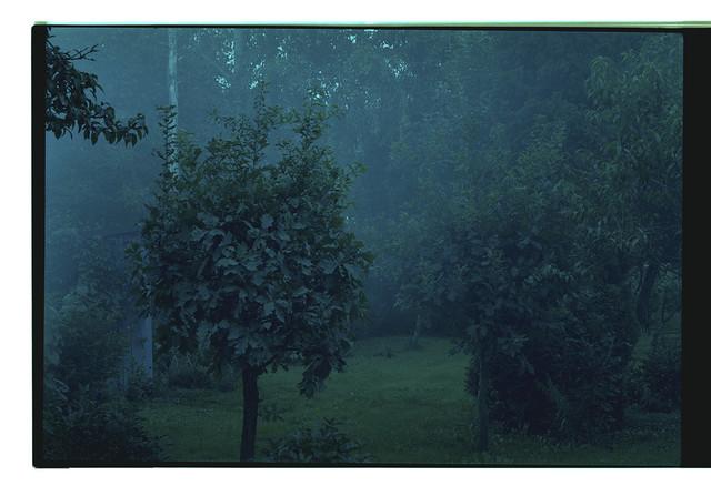 Artwork Bez názvu (série Zahrada)#9 main picture