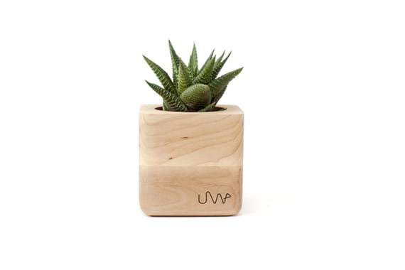 Flowerpot Sucube by  Urbanwood,