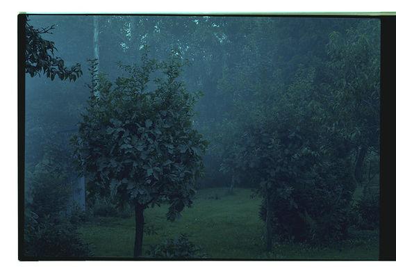 Bez názvu (série Zahrada)#2 by Adéla Kremplová,
