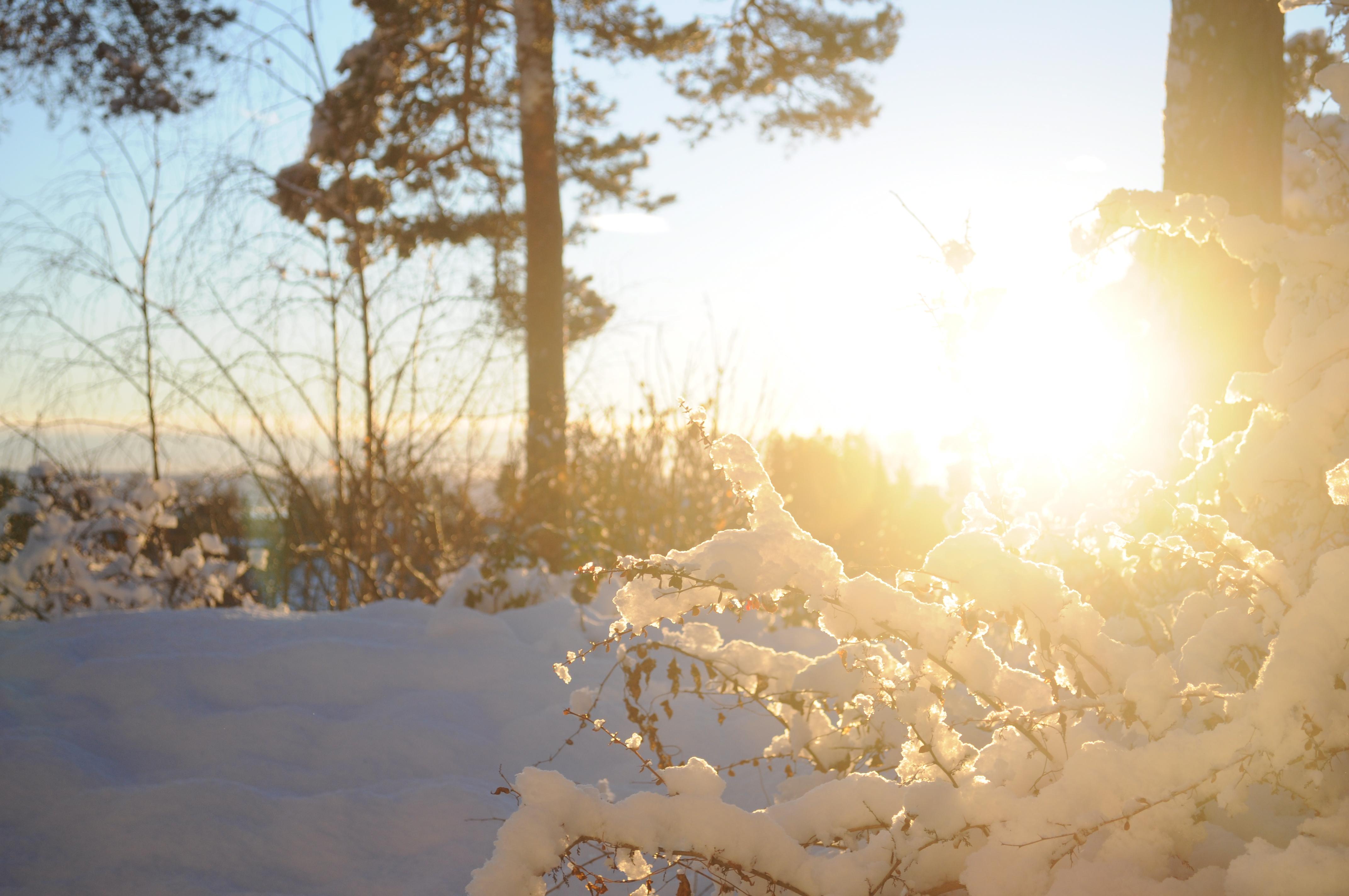 Snøen som faller i år
