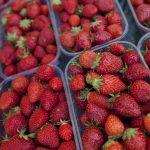 Quali sono le proprietà delle fragole?